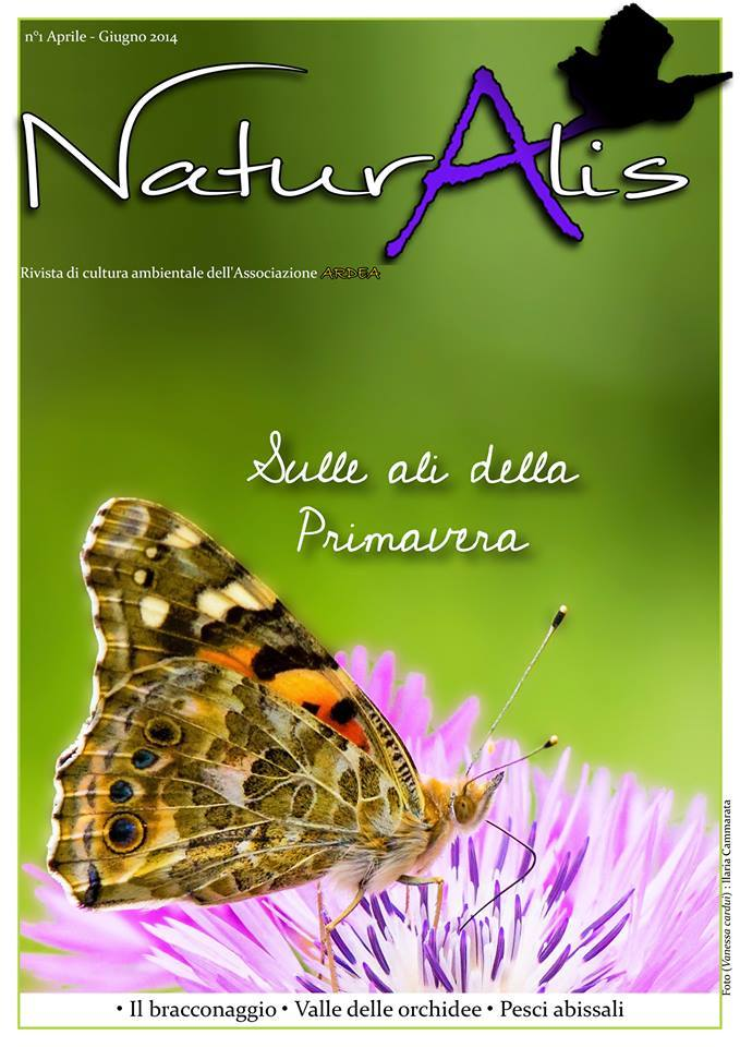 naturalis 1