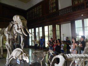 Gruppi in visita al Museo di Zoologia