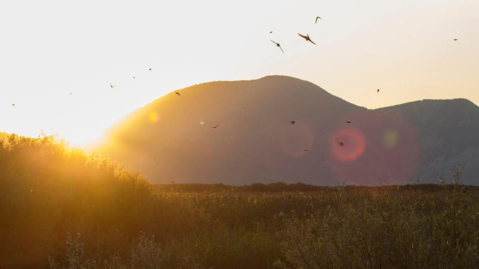 Rondinata al tramonto